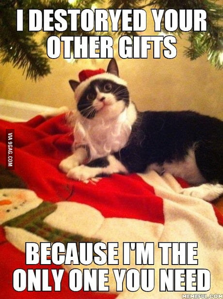 Overly Christmas.Overly Attached Christmas Cat 9gag