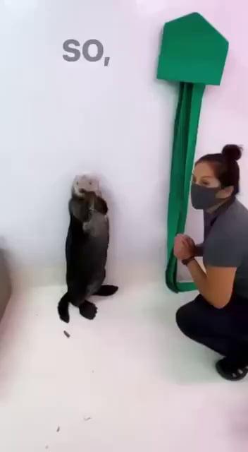 TIL Otters have pockets