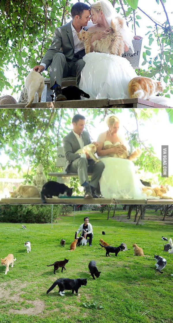 Canadian Couple Gets Married At A Cat Sanctuary In Front