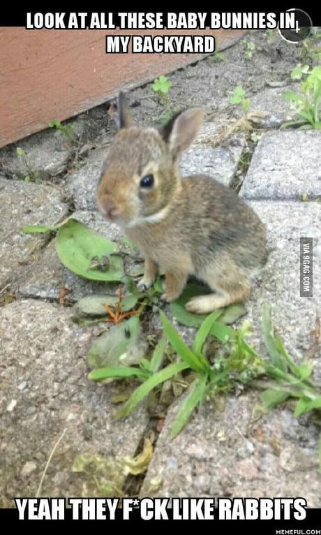 Baby Bunnies In Backyard - House of Things Wallpaper