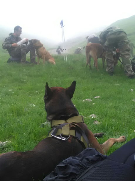 Me and my doggo squad preparing for helping the victims of Maria and Irma, proud to be a part of it :)