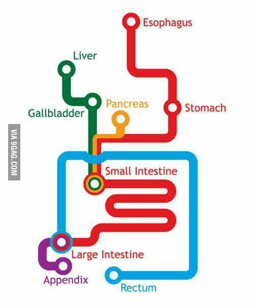 As A Subway Map.Digestive System Reimagined As A Subway Map 9gag