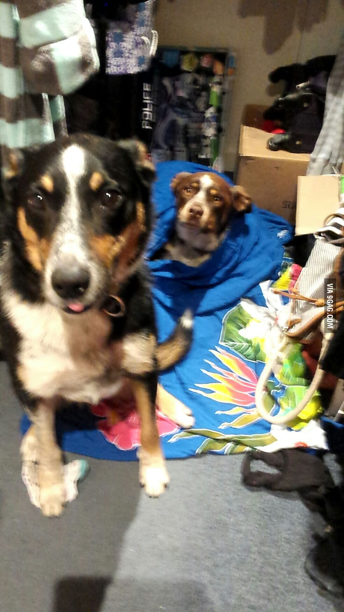 My puppies are scared of fireworks  hiding in the closet - 9GAG