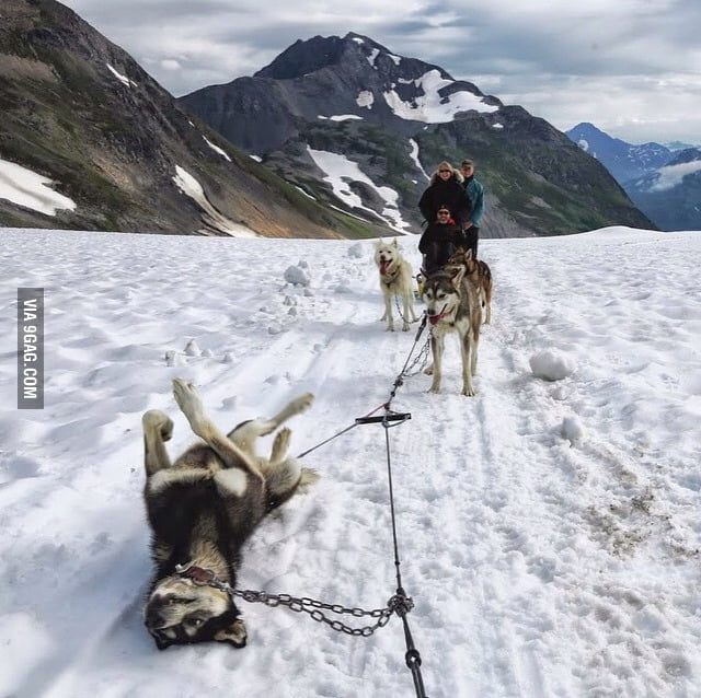This is what a Flat tire looks like in alaska