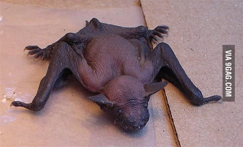 Naked bat pictures