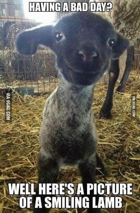 Maybe This Will Cheer You Up 9gag