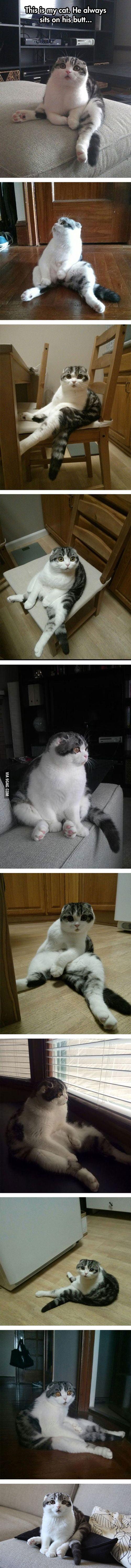I present my cat