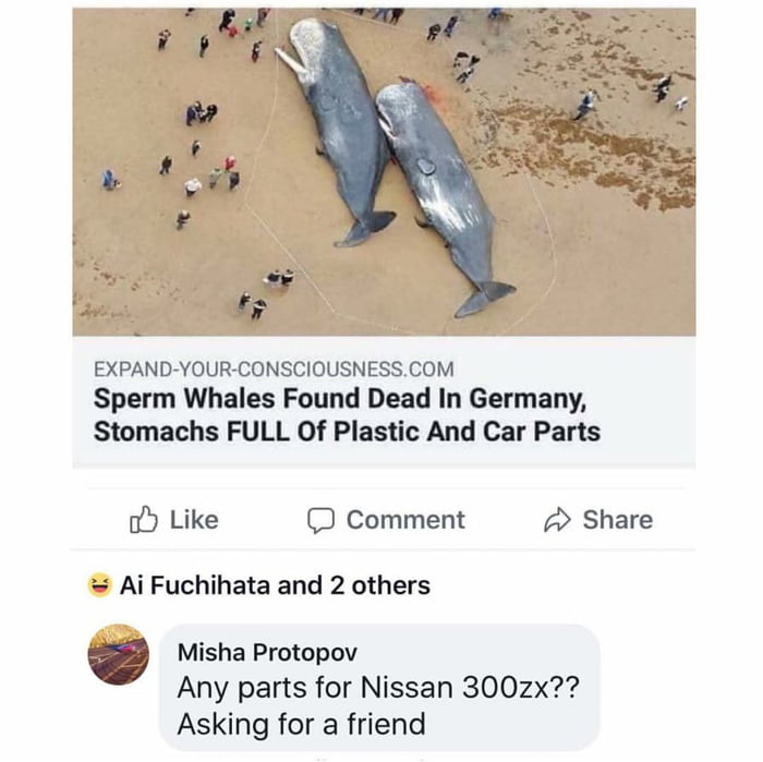 Every Whale Should Have Some Parts For Nissan Cars 9gag