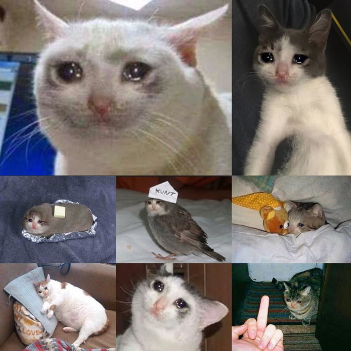 Do you guys have anymore of this sad cat meme? - 9GAG