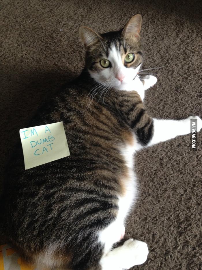 Cat abuse  - 9GAG
