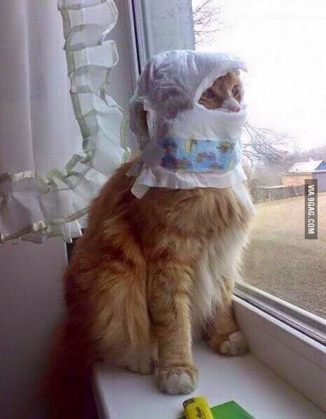 You know that the haze situation is getting serious when your cat ...