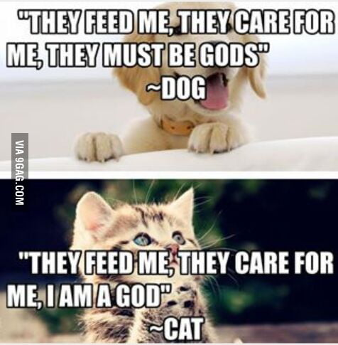 Dog Food Yay Omg I Love You Cat About F King Time 9gag Memes are often meant to ridicule one thing or another lightly, but these cute memes will definitely whether they're celebrating their birthdays, looking for attention, crushing their owners with doggy. food yay omg i love you cat