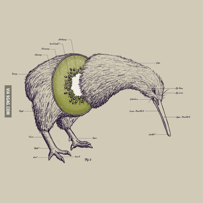 Kiwi Bird Fruit Hybrid 9gag