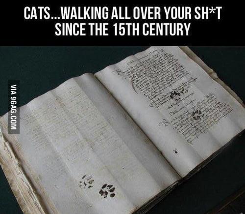 Cats ..
