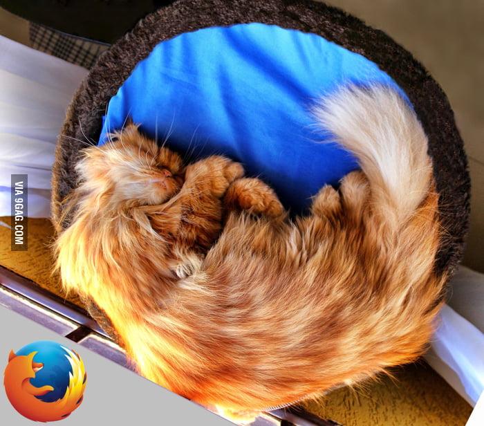 My cat sleeps like a browser.