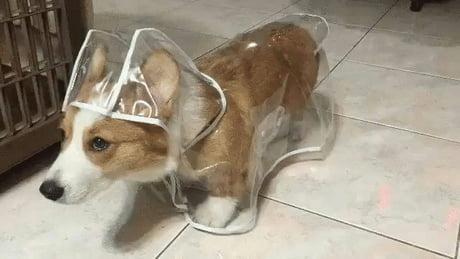 Dry doggo