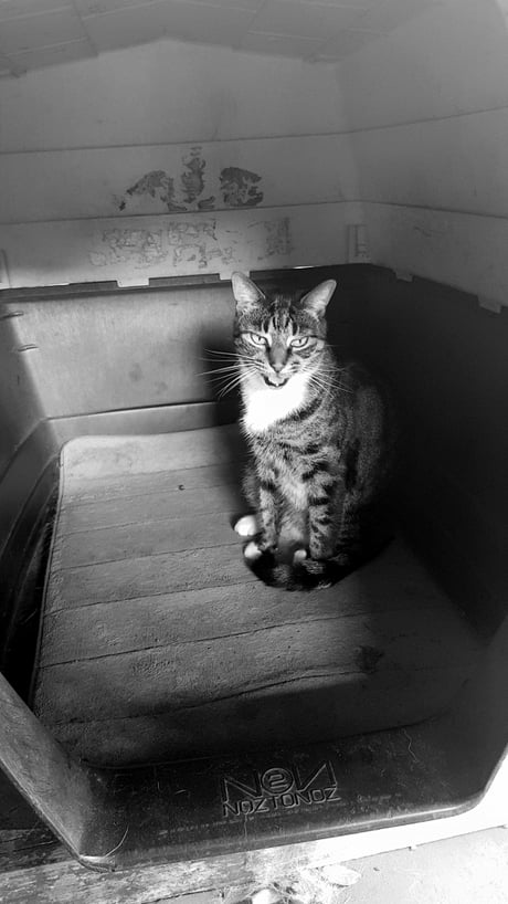 Kitty in a kennel