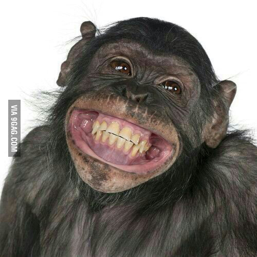 Just one happy monkey :) - 9GAG