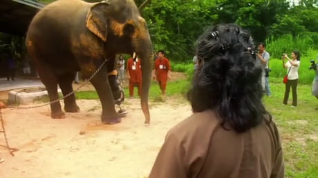 Elephant survives landmine to walk again.