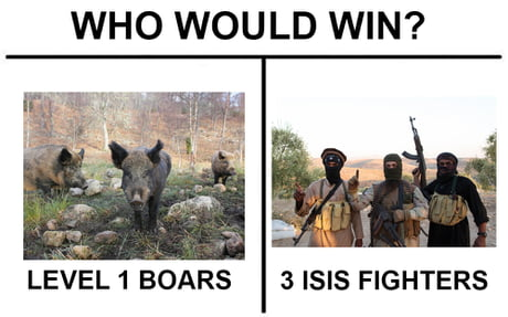 ISIS vs BOARS
