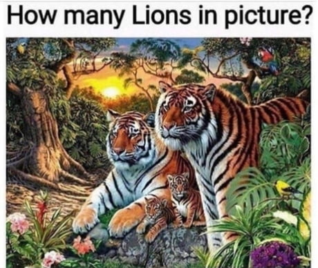 How many lions?