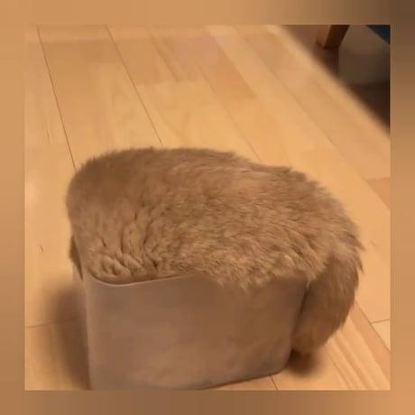 I think my cat has autism.