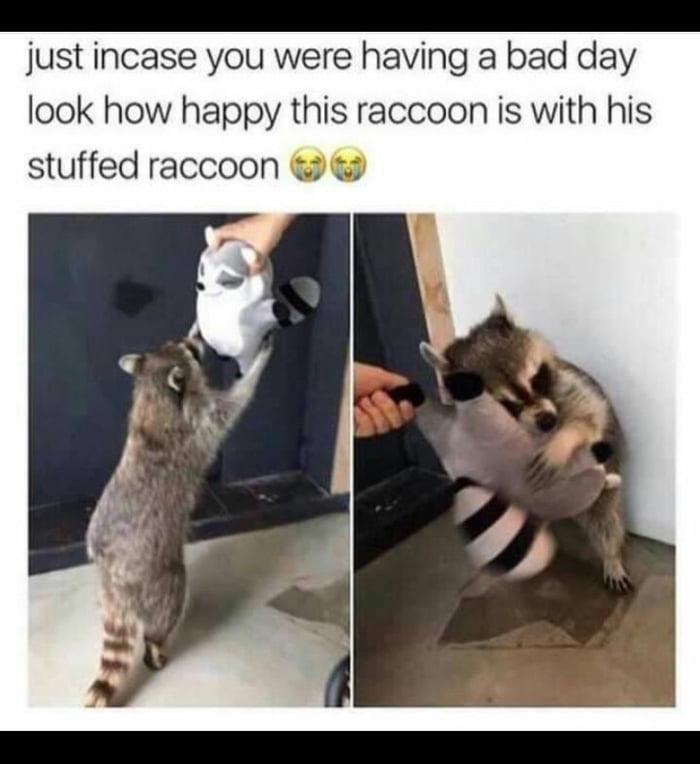 Trash Panda Oli