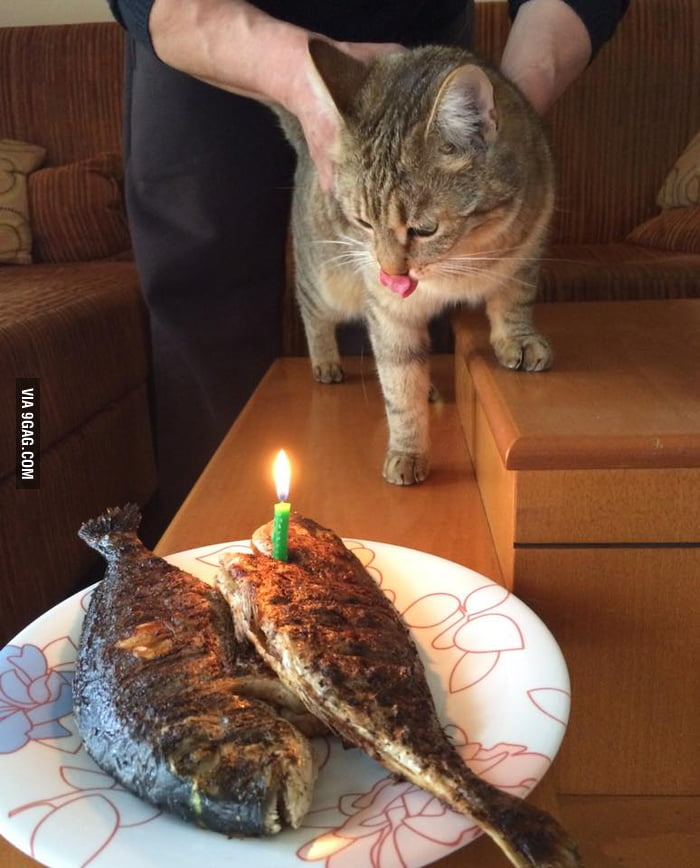 My Cat Just Turned 1 Years Old Here Is Homemade Birthday Cake