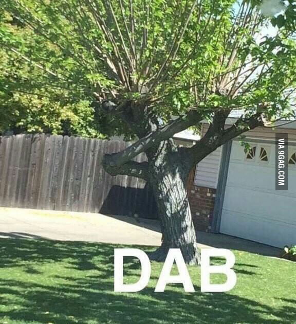 Even tree are doing dab - 9GAG