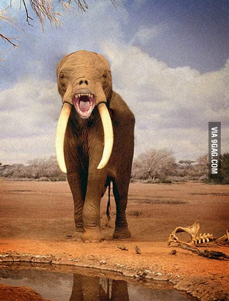 An Elephant Without A Trunk Or Ears 9GAG