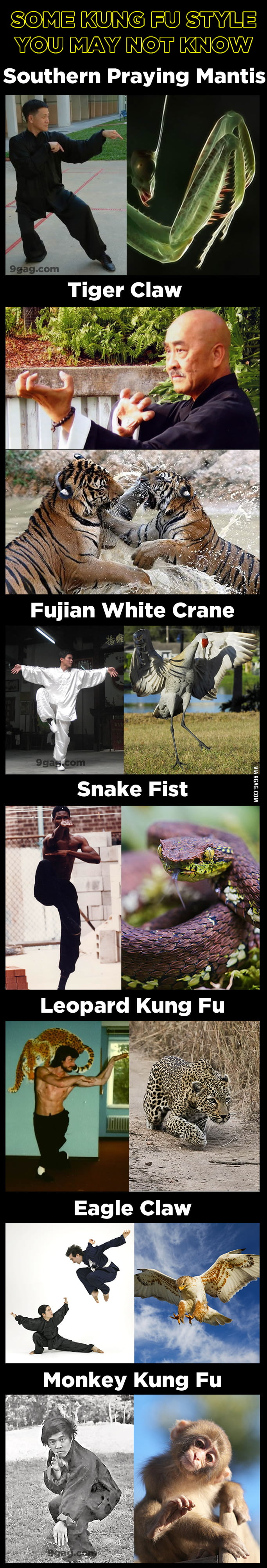 7 Kung Fu styles which inspired by animals