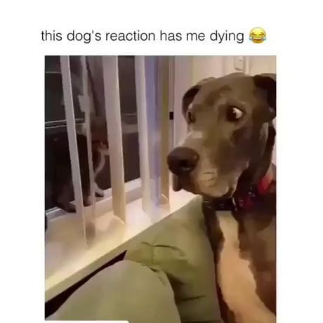 :DOG: :CUTE: