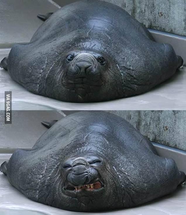 Sneezing Seal