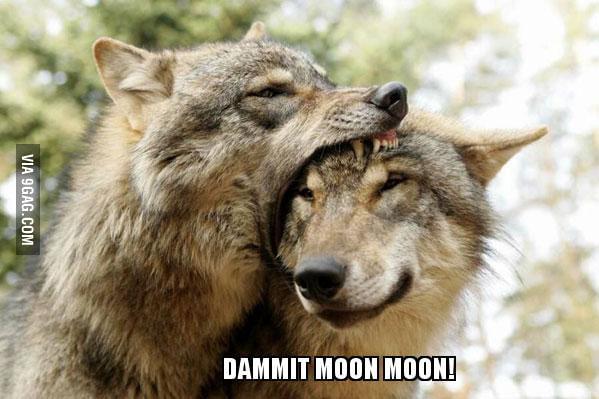 Moon Moon strikes again