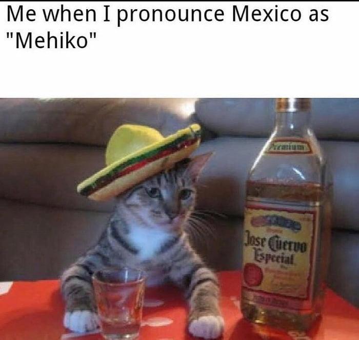 El gaton