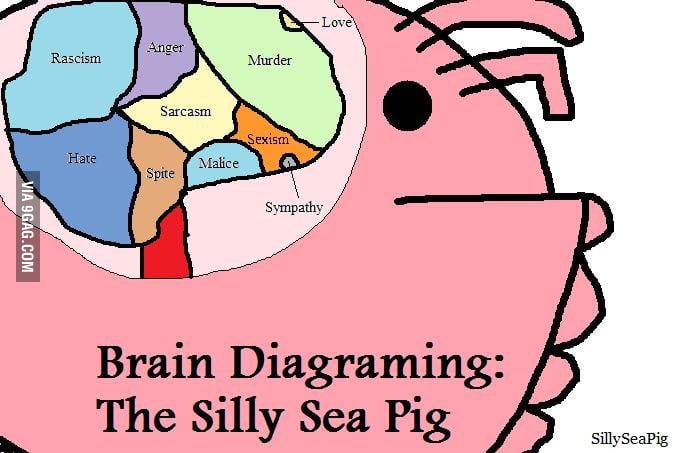 sea pig diagram labeled fetal pig diagram just a diagram of sea pig's brain - 9gag
