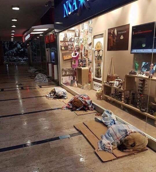 It's been snowing in Istanbul. Street dogs have been let inside the malls.