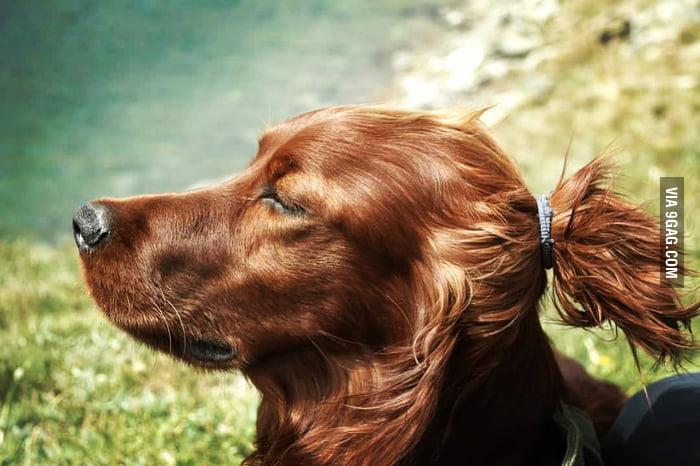 Man bun dog! - 9GAG