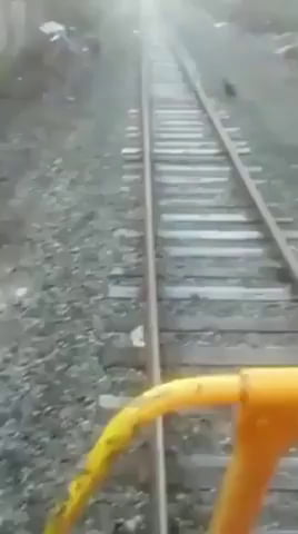 This operator stop the train to save a dog that was tied up to the tracks