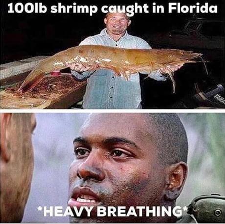 Best 30 Bubba Gump Shrimp Co Fun On 9gag