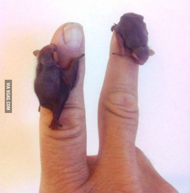 Who would have thought baby bats could be so adorable?
