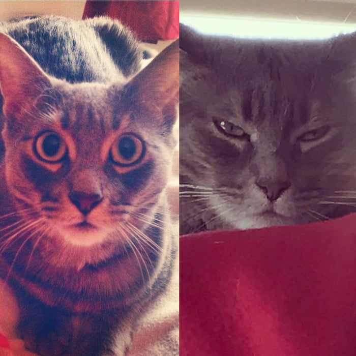 How my cat looked at me as a foster cat vs. how she looks at me three years later