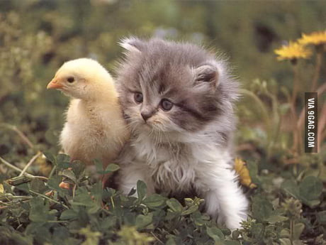 Cute Chick With A Hairy Pussy 9gag