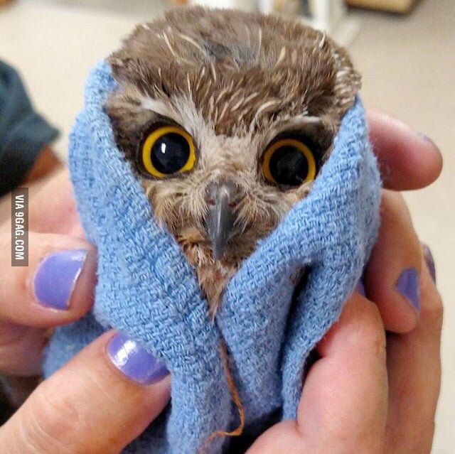 Baby owl after a bath 9gag for Bathroom 9gag