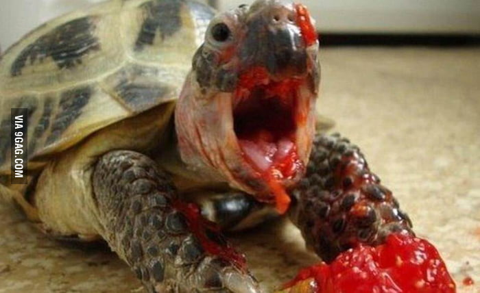 Just a turtle eating a...