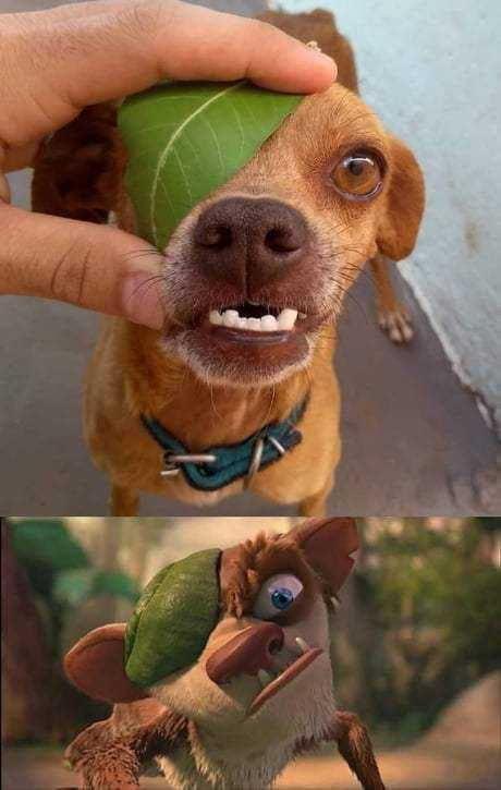 Overbite Dog Meme
