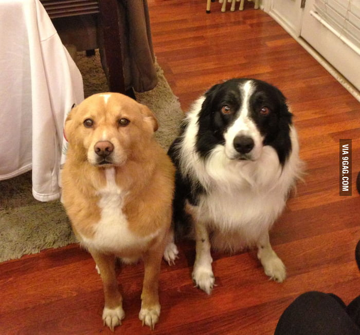 I don't know what they did, but I've never seen more guilt on either of their faces...