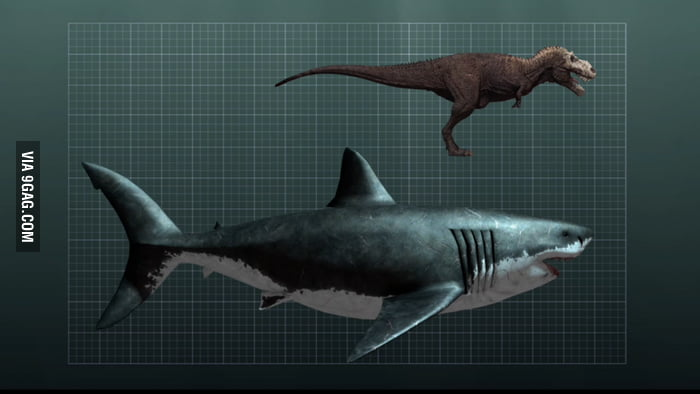 Size Comparison Between A Megalodon Shark And A T-Rex - 9GAG