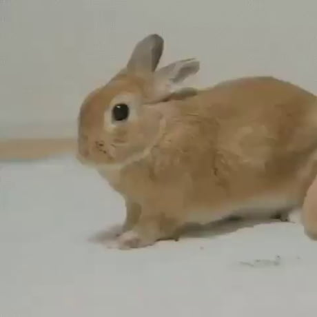 You're a simple 9gagger. You see a rabbit stretching and yawning, what do you do?