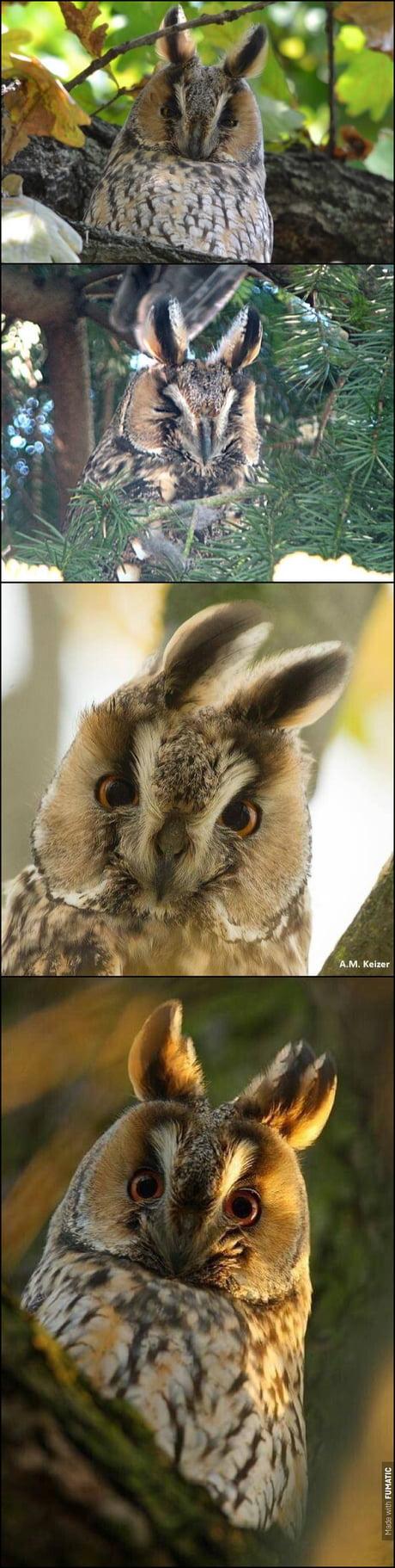Asio otus.Or rabbit on the tree. If I name it.